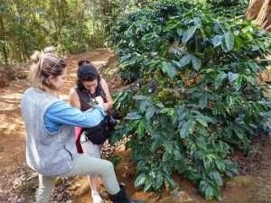 Video-Reisebericht: Durch die Plantagen von Espirito Santo, Brasilien